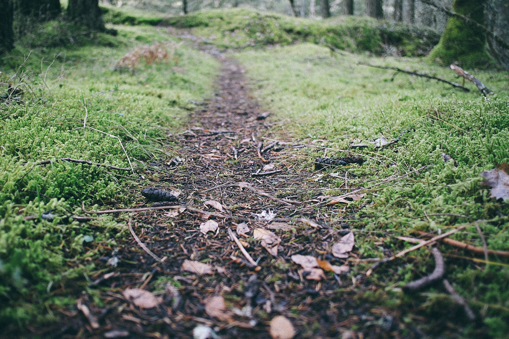 """Featured image for """"The Path Less Traveled Is…"""""""
